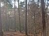 wandeling-bossen02-12-2012uen-uiterwaarden-arcen02kl