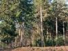 wandeling-bossen02-12-2012uen-uiterwaarden-arcen03kl