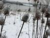 wandeling20-01-2013hamert-wellerlooi01kl