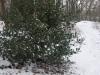 wandeling20-01-2013hamert-wellerlooi03kl