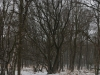 wandeling20-01-2013hamert-wellerlooi05kl