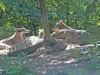 diergaarde-blijdorp18-09-2011rotterdam06kl