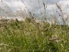 fietstocht17-06-2012rondje-kempen06kl