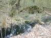 heldense11-04-2010bossen03kl