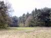heldense11-04-2010bossen09kl