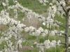 heldense11-04-2010bossen22kl