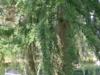 historisch18-07-2012rondje-veluwe-omgeving-tullekensmolen01kl