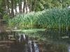 historisch18-07-2012rondje-veluwe-omgeving-tullekensmolen07kl