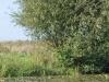 kanotocht-asseltse16-09-2012plassen11kl