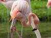 kasteel15-07-2012tuinen-arcen-flamingo-s01kl