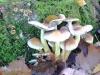 groote-heide26-10-2008wandeling014kl