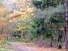 groote-heide26-10-2008wandeling015kl