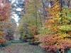 groote-heide26-10-2008wandeling041kl