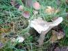 groote-heide26-10-2008wandeling046kl