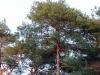 groote-heide26-10-2008wandeling131kl