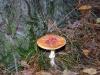 groote-heide26-10-2008wandeling134kl