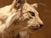 maastricht11-07-2012natuurhistorsch-museum07kl