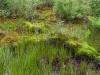 nationaal-park09-06-2012de-maasduinen-well34kl