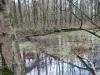natuurgebied04-03-2012zwarte-water06kl