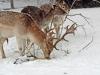 ouwehands-dierenpark07-12-2012rhenen02kl