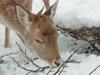 ouwehands-dierenpark07-12-2012rhenen06kl