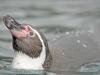 ouwehands-dierenpark07-12-2012rhenen15kl