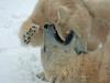 ouwehands-dierenpark07-12-2012rhenen16kl