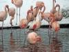 ouwehands-dierenpark07-12-2012rhenen24kl