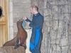 ouwehands-dierenpark07-12-2012rhenen33kl