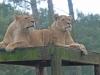 safaripark10-03-2012beeksebergen41kl