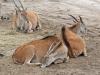 safaripark10-03-2012beeksebergen67kl