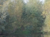 baarlo-uiterwaarde12-10-2008maas05kl