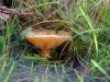 baarlo-uiterwaarde12-10-2008maas07kl