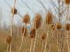houtblerick-uiterwaarde11-01-2009maas-winter07kl
