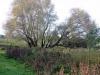 houtblerick-uiterwaarde12-10-2008maas01kl