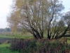 houtblerick-uiterwaarde12-10-2008maas02kl