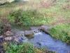 houtblerick-uiterwaarde12-10-2008maas04kl