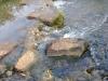 houtblerick-uiterwaarde12-10-2008maas05kl