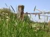 wandeling23-05-2010broekhuizenvorst-zicht-op-de-maas03kl