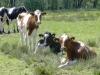 wandeling23-05-2010broekhuizenvorst-zicht-op-de-maas16kl