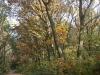 wandeling-crayelheide21-10-2012greune-long17kl