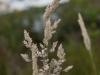 nationaal-park09-06-2012de-maasduinen-well18kl