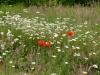 wandeling13-06-2010omgeving-schatberg15kl