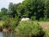 wandeling26-05-2012swalm-swalmen05kl