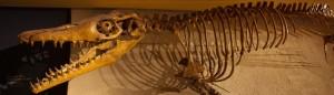 cropped-maastricht11-07-2012natuurhistorsch-museum06.jpg